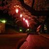 夜桜。綺麗です。