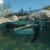 フンボルトペンギンだな。カメラのアングル的に結構良いアングルだと思った。ボケがうまく効いたかなと。反射が反省点